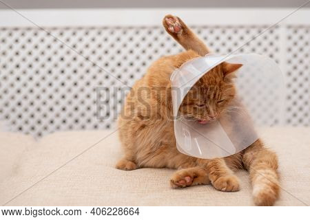 Ginger Cat With Vet Elizabethan Collar Trying To Licking His Paw. Close-up Of Striped, Cat Lying On