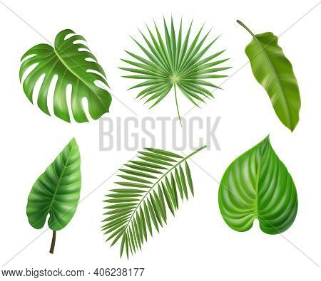 Tropical Palm Leaves Set Isolated On White Background. Monstera Philodendron And Banana Jungle Leaf,