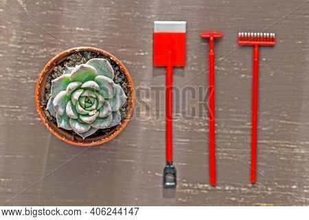 Small Shovel, Rake, Hoe And Houseplant On A Wooden Background. Top View Flat Lay. Home Plants Care C