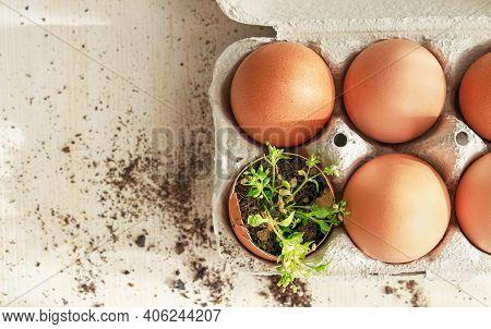 Seedling Plants In Eggshells, Eco Gardening, Reuse ,eco Green Sustainable Living Concept, Plastic Fr