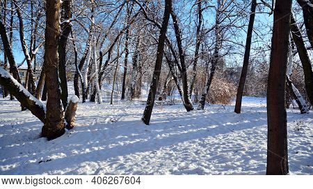 Winter Landscape, Winter Trees Covered With Snow. Beautiful Winter Park With Sunrise Colors Sky And