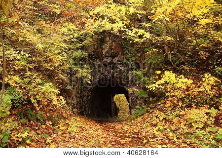 Tunnel With Autum Leaves