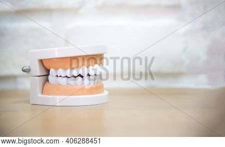 Teeth Model Isolated For Demonstration Of Anatomical Tooth Brushes And Dental Floss On White Backgro