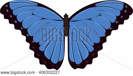 Blue Butterfly Close Up. Vector Tropical Butterfly. Isolated Object.