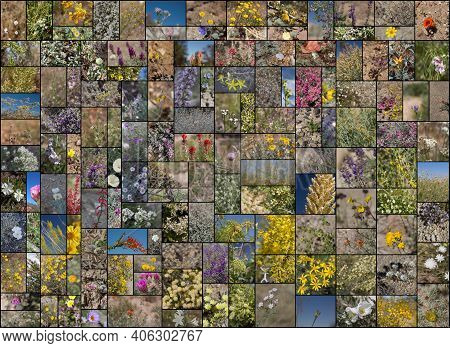 135 Species Of Wild Blooming Southern California Indigenous Plants. Photographed  During Calendar Ye