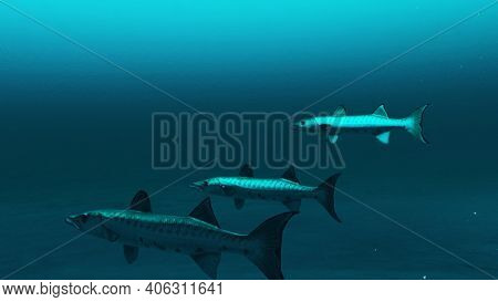 Three Barracuda Fishes Swimming In The Deep Blue Ocean Water, Underwater Scene Of Barracuda Fishes,