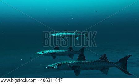 Closeup Of Three Barracuda Fishes Swimming In The Deep Blue Ocean Water, Underwater Scene Of Barracu