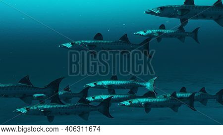 Closeup Of Multiple Barracuda Fishes Swimming In The Deep Blue Ocean Water, Underwater Scene Of Barr