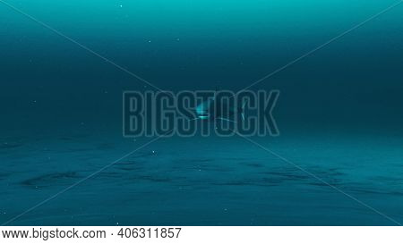 A Great White Shark Swimming In The Deep Blue Ocean Water, Underwater Scene Of White Shark, Beauty O