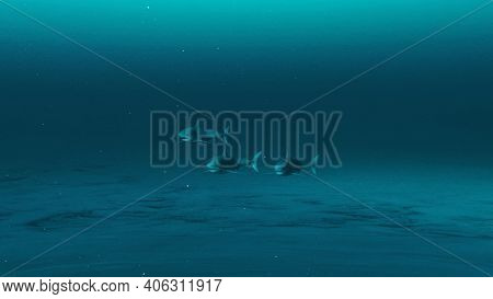 Three Great White Sharks Swimming In The Deep Blue Ocean Water, Underwater Scene Of White Sharks, Be