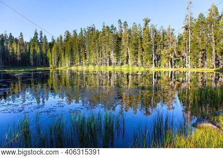 USA. Quiet round lake. Majestic coniferous forest are reflected in the smooth water of the lake. The Tioga Road and Pass in Yosemite Park.