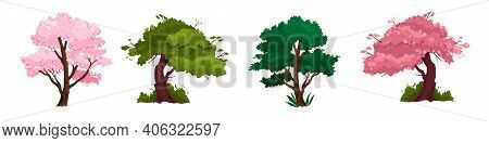 Spring Trees Vector Nature Illustration Collection With Pink Blossom Sakura, Trunks, Green Crown. Is
