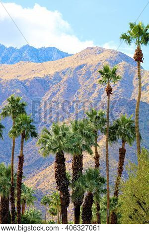 Palm Trees With Rugged Mountains Beyond Taken At The Colorado Desert In Palm Springs, Ca