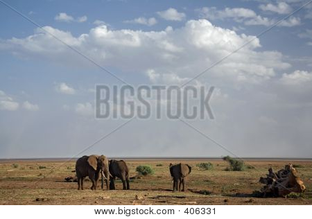 animals elephants poster