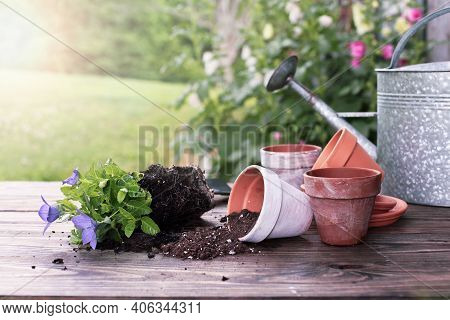 Outdoor Garden Bench With Balloon Flowers And Soil Spilling From Clay Pottery In Front Of A Stand Of