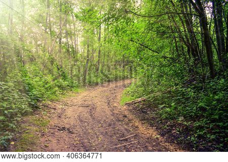 Road (trail, Pathway, Footpath) In Summer Forest. Spring Trail Hiking Road In Green Forest Morning F