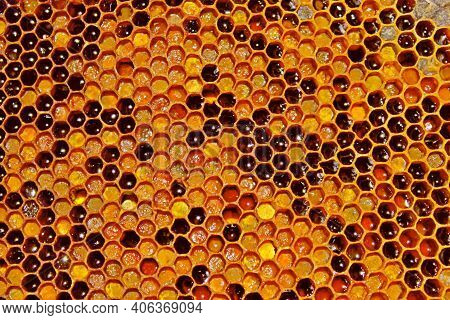 Close Up Honeycomb (honey Comb) And Honey Cells Texture Pattern Background. Macro Of Honeycomb Backg