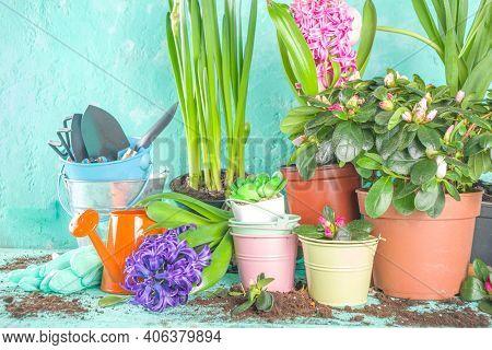 Spring Gardening Concept
