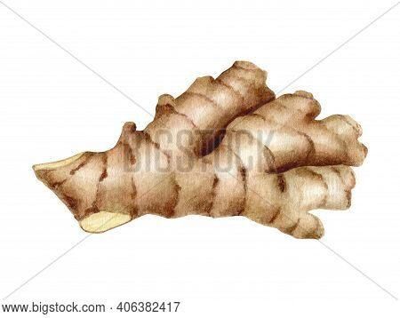 Watercolor Ginger Root Illustration. Hand Painted Ginger Rhizome Isolated On White Background For Pa