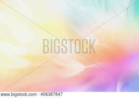 Soft Abstract Color Gradient Floral Background , Abstract Dandelion