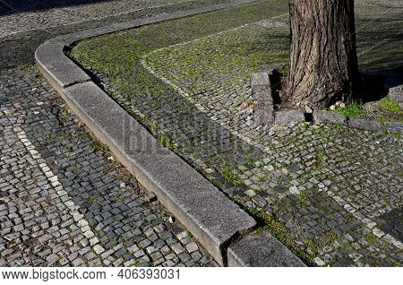 Limestone Black White Mosaic Old Badly Repaired With Patches. The Tree Roots Deform The Surface And