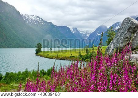 The Glacier Lake In Norway During The Cloudy Day. A Lot Of Foxgloves On The Side Of The Lake. Very N