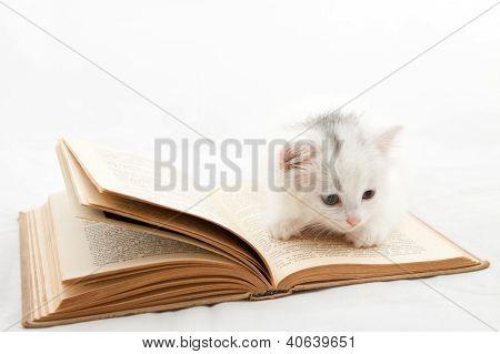 Kitten Moans On A Book