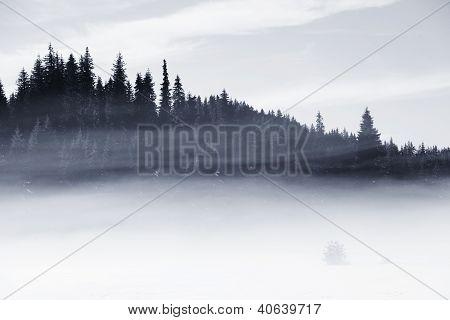 Misti Field