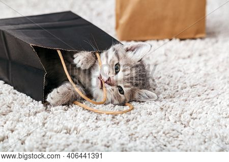 Cat Gnaws Spoils Delivery Bag At Home. Adorable Small Tabby Kitten Is Hiding In Paper Shopping Bag.