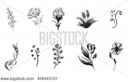 10 Hand-drawn Blossom Wildflowers. Big Collection Of 10 Hand-drawn Roses. Big Floral Botanical Set.