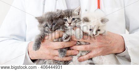 Cats In Vet Doctor Hands. Doctor Veterinarian Examining 3 Three Kittens. Baby Cat In Veterinary Clin