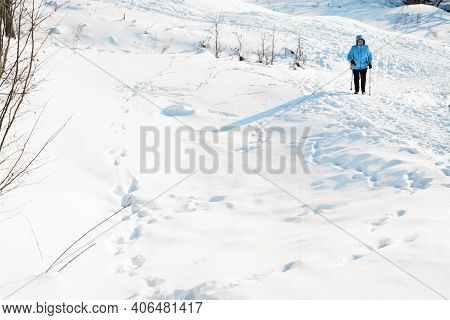 Nordic Walking In Winter. Woman Climbs Snowy Mountain Using Nordic Walking Sticks. Active Lifestyle,