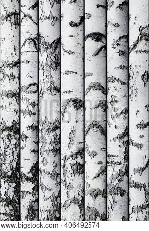 Seamless Background Of Birch Trunks Stacked In A Row. To Copy Horizontally. Lumber. Template For Wri