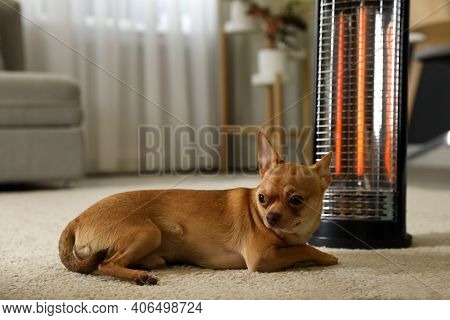 Chihuahua Near Modern Electric Halogen Heater At Home