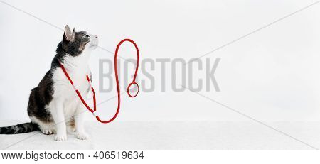 Domestic Tabby White Gray Adult Cat With Red Stethoscope Sitting On White Table. Veterinarian Concep
