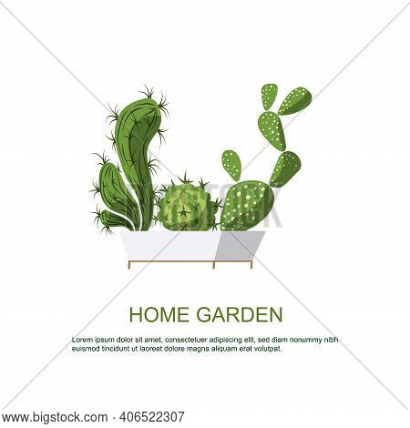 Cactus In Beautiful White Pot. Home Garden. Plants For Home Comfort.