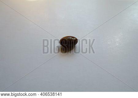 1 Glossy Brown Softgel Capsule Of Vitamin D3