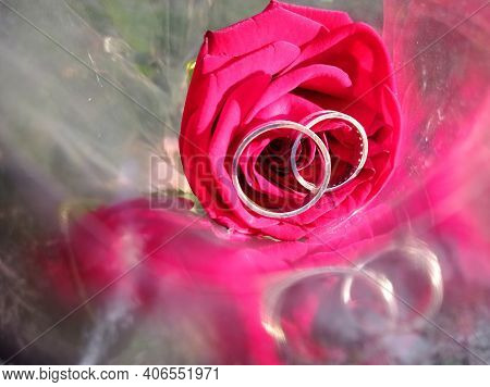 The Rings Are On A Red Rose. Red Gold Rose In Light Polyethylene Plastic .