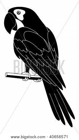 Parrot, black silhouette