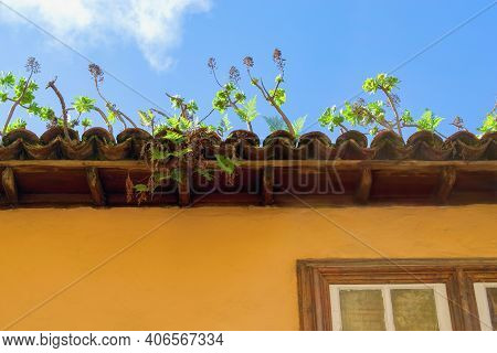 Green Plants Growing On The House Roof