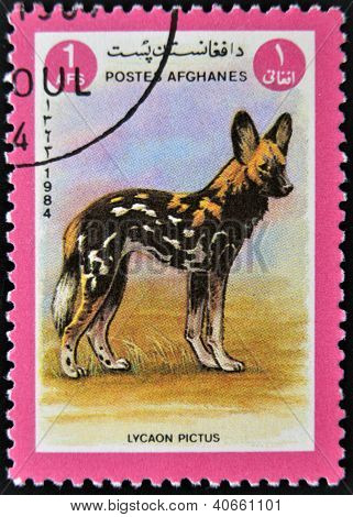 AFGANISTAN - CIRCA 1984: A stamp printed in AFGANISTAN shows image of a wild dog (Lycaon pictus)