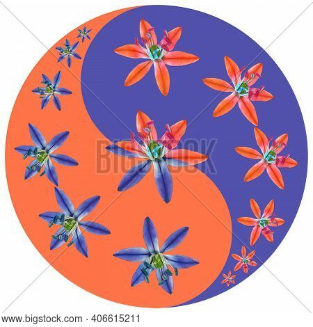 Floral Symbol Yin-yang. Scilla, Bluebell. Geometric Pattern Of Yin-yang Symbol, From Plants On Color