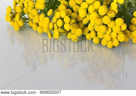 Yellow Tanacetum Field Flowers On Glossy Glass Surface On White Background. Photo With Copy Blank Sp