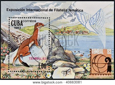 A stamp printed in Cuba shows Mustela nivalis (International Philatelic Exhibition Tembal 83)
