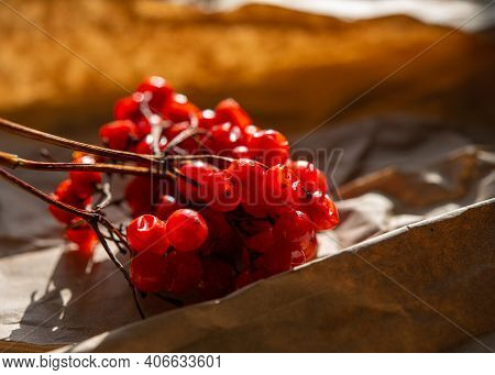 Clusters Of Red Viburnum Berries In The Sunlight On The Table Surface. Winter Season.