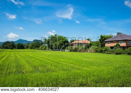 Beautiful View Of Agriculture Green Rice Field Landscape Against Blue Sky With Clouds Background, Th
