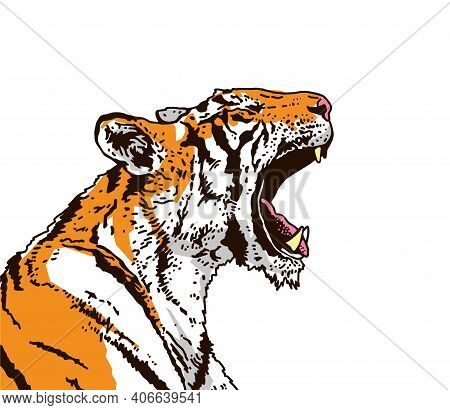 A Snarling Tiger In Profile. The Grin Of A Tiger. Detailed Drawing. The Symbol Of The New 2022. Vect