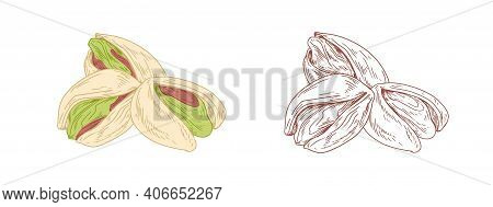 Colored Pistachio Nuts And Unpainted Outlined Sketch Of Pistaches Fruits. Green Kernels In Nutshells
