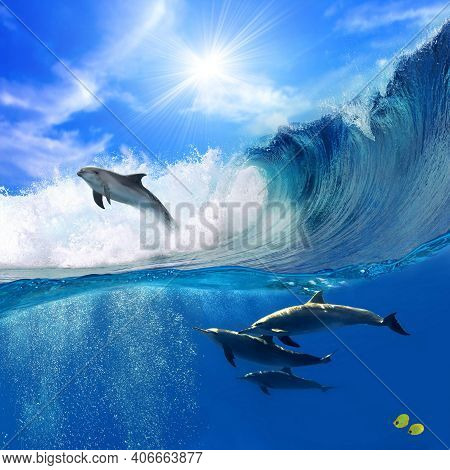 Charming Dolphins Swimming With Other Dolphins In The Pool. Two Dolphins Enjoying Together. Dolphins