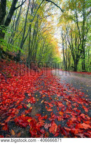 Autumn Landscape, Autumn Scenery From Sunny Autumn Park Alley, Bright Autumn Scenery. Bare Autumn Tr